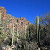 The canyon in this area is narrow, with steep rocky walls. The saguaros are in abundance within this area.