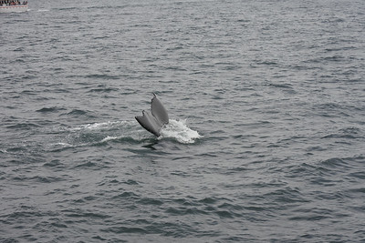 Whale's Tail 2