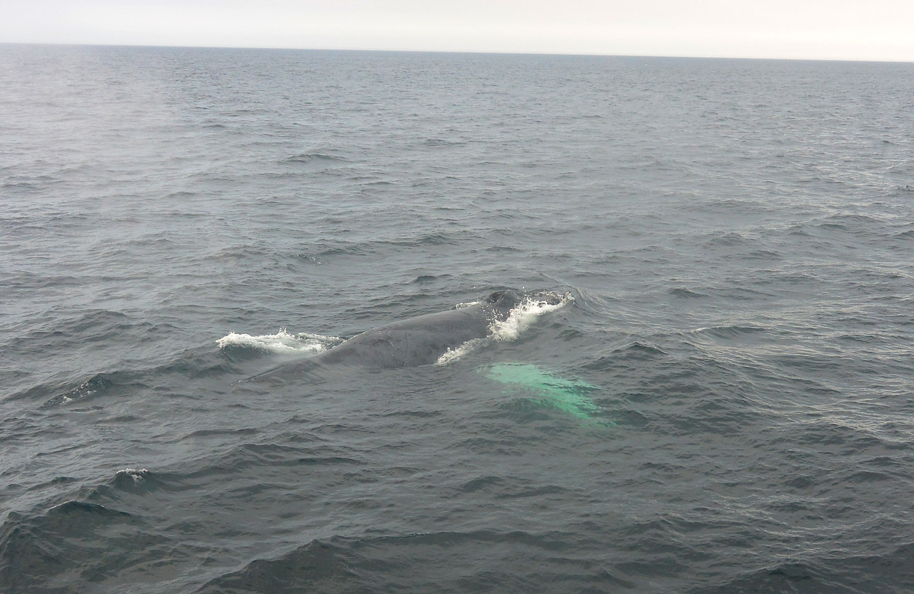 Whale by The Boat