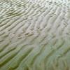 CA Crane Beach 4 1 9