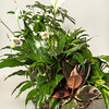 Desi Smith Photo.       A garden dish containing peace plant $40.00 at Russell's Florist on 18 Eastern Ave in Gloucester.