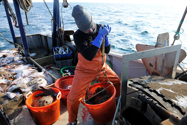 NOAA fisheries observer Victoria Oriole, 22, inspects the catch and collects data on weight and numbers of the fish caught by Captain Al Cottone' on Friday January 19, 2018. NOAA observers select boats randomly to monitor and report on fish population and health as well as monitor fisherman bringing the set quotas. Photo by Joseph Prezioso