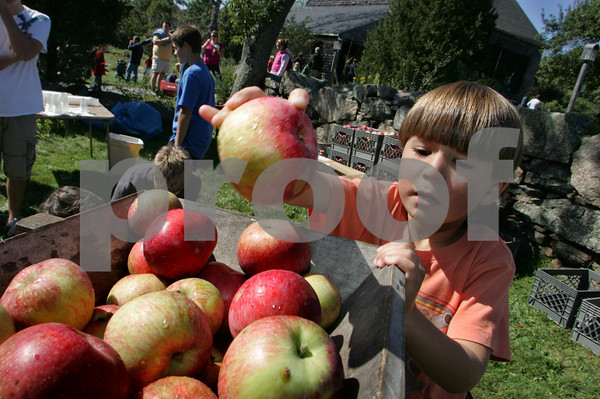 Essex: Rafi Santomenna, 6, tosses an apple into the cider press at the Cox Reservation Fall Festival Saturday afternoon. Once the bin was filled the apples were pressed and the juice was handed out for the kids to taste. Mary Muckenhoupt/Gloucester Daily Times<br /> , Essex: Rafi Santomenna, 6, tosses an apple into the cider press at the Cox Reservation Fall Festival Saturday afternoon. Once the bin was filled the apples were pressed and the juice was handed out for the kids to taste. Mary Muckenhoupt/Gloucester Daily Times