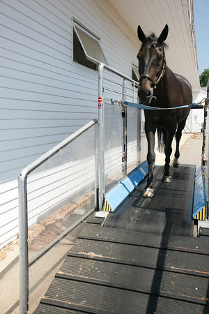 "Roxett VII, ""Rocket"" a 23-year-old German Holsteiner, gets some exercise on a treadmill at Silver Oak Equestrian Center at  Hampton Falls, N.H. <br /> Amy Sweeney/Staff photo"