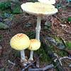 Gail McCarthy/Cape Ann Magazine Mushroom in Dogtown.