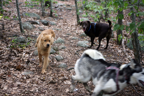 Dogtown is a favorite place for dog owners because the dogs can roam free.<br /> Photo by Amy Sweeney