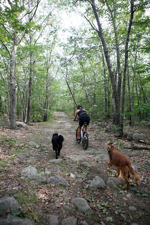 Erin Canniff, mountain bikes with her dogs through Dogtown on a warm August day. The shaded paths make a great place to ride even during the heat of the summer.<br /> Photo by Amy Sweeney