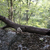 A branch formation looks like a lizard.<br /> Photo by Amy Sweeney