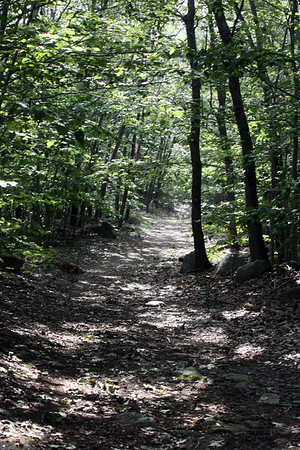 One of the trails running through the 3,000 acres of Dogtown.<br /> Photo by Amy Sweeney