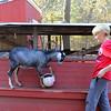 Allegra Boverman/Cape Ann Magazine. Austin Monell, 12, of Gloucester, plays soccer with his Nubian goat Leo.