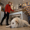 Desi Smith/Cape Ann<br /> Meg Lustig, owner of the Canterbury Hill Studio & Gallery in Rockport, says Izzy, her 4-year-old, 120-pound Great Pyrenees-retriever mix, when not keeping an eye on her and greeting customers, sleeps much of the day.