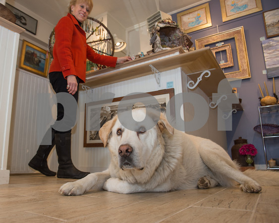 Desi Smith/Cape Ann<br /> Meg Lustig, owner of the Canterbury Hill Studio & Gallery in Rockport, says Izzy, her 4-year-old, 120-pound Great Pyrenees-retriever mix is unbelievably social and loves children.