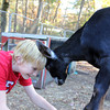 Allegra Boverman/Cape Ann Magazine. Austin Monell, 12, of Gloucester, playfully butts heads with one of his goats, Ringo.