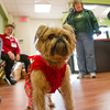Desi Smith/Cape Ann magazine<br /> Bailey, a 5 1/2 old Brussels Griffons, came to the open house all dressed up with his owner, Mary Clark of Chelsea, back right. Bailey was adopted at 4 months when Cape Ann Animal was located on Main Street in Gloucester.
