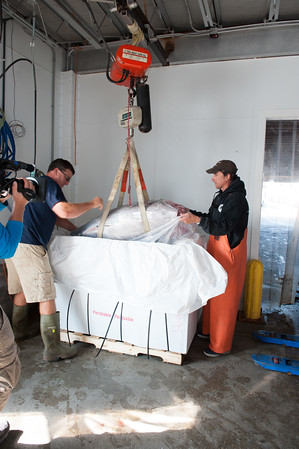 "A ""Wicked Tuna"" camera crew films the packing of a bluefin landed by Capt. Dave Carraro, right, at Compass Seafood on Commercial Street.. Photo by Desi Smith."