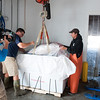 """A """"Wicked Tuna"""" camera crew films the packing of a bluefin landed by Capt. Dave Carraro, right, at Compass Seafood on Commercial Street.. Photo by Desi Smith."""