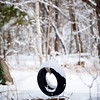 Rockport: (Snow Tire) Friday nights snowfall covers a tire swing in a side yard Saturday morning on Squarm Rd. Desi Smith/Gloucester Daily Times. March 10,2012