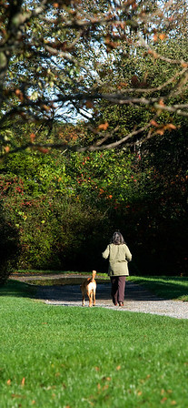 Jim Vaiknoras/Cape Ann Magazine. A woman walks her dog on a cool crisp autumn morning at the Allyn Cox Reservation in Essex.