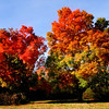 Jim Vaiknoras/Cape Ann Magazine.A pair of swamp maples , it's leaves a riot of fall color , at the  Cox Reservation in Essex.