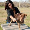 Dr. Angelique Barbara works on Bogen who was rescued from a junk yard in Puerto Rico. Desi Smith Photo