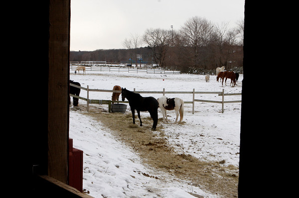 ROCKPORT: Horses at Seaview Farm. Staff photo/Amy Sweeney