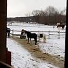 ROCKPORT: Horses at Seaview Farm. Staff photo/Amy Sweeney
