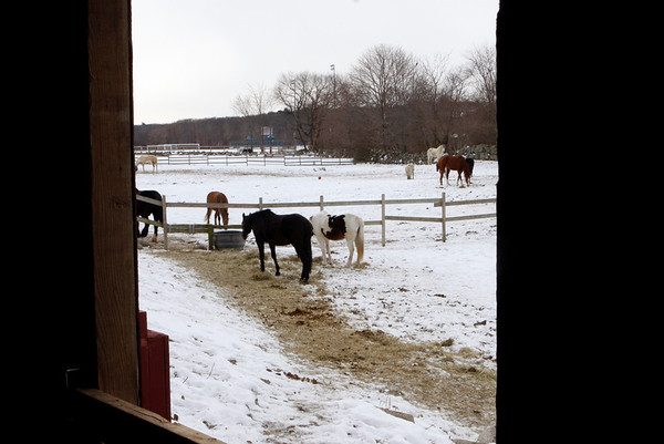 Rockport: Seaview Farm.  Staff photo/Amy Sweeney