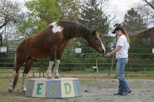 Rockport: Trainer Wendy Greeke works with Gui, who belongs to barn manager Kelly Fennessey, in a ring at Seaview Farm.  Photo by Mary Muckenhoupt