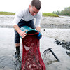 Rich Bonfanti, 24, of Gloucester pours clams into an onion bag.<br /> Photo by Desi Smith.