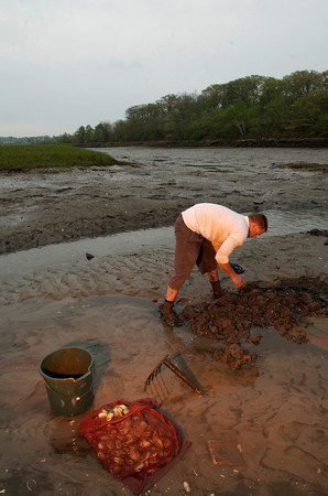 Rich Bonfanti, 24, of Gloucester is currently the youngest commerical fisherman in Gloucester. He is clamming at the The Sand Bar<br /> Photo by Desi Smith.