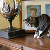 The Roell's kitten Kiki plays in front of pictures of Florian, 20, and Sytske, 18, who are away at college. Photo by Mary Muckenhoupt