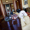 David and Gail Vastola's poodle sit is on the couch in the living room of their home that was once the old Carnegie Library. Photo by Mary Muckenhoupt
