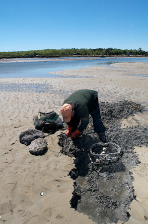 Jack Montoni, 57, of Gloucester, digs up clams in Farm Creek.<br /> Photo by Desi Smith.