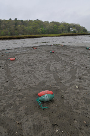 Clamming on Cape Ann.<br /> Photo by Desi Smith.