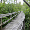 ALLEGRA BOVERMAN/Staff photo. Cape Ann Magazine. Essex: Along the boardwalk in The Manchester Woods.
