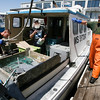 Kate Glass/Cape Ann Magazine.  Brian Richie, left, Paul Cohan, center, and Chris Jacques, right, prepare to unload their catch from Cohan's boat, Sasquatch, at the Gloucester Seafood Display Auction in June 2009.