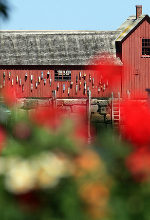 ALLEGRA BOVERMAN/Cape Ann Magazine.Cheerful flowers in a windowbox along Main Street give a different point of view to Motif No. 1 in Rockport.