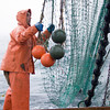 Pete VanDerpool works to straighten out the net while hauling it back on board after dragging it along the ocean bottom floor for 15 minutes at about 5am on Sunday morning, June 28, 2009.  Within 15 minutes they had caught their 800-pound limit of cod and were cleaning out the net and returning back home to Rockport.   Photo by Kristen Olson