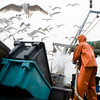 Pete VanDerpool hoses down the deck and washes out the totes after cleaning and sorting the day's catch while gulls fill the air, searching for any fish scraps that are thrown overboard as the boat heads back toward Rockport early Sunday morning, June 28, 2009.   Photo by Kristen Olson