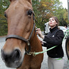 Marissa McLaughlin, of Woburn, brushes Joker Wild after a ride through Bradley Palmer State Park. David Le/Cape Ann Magazine