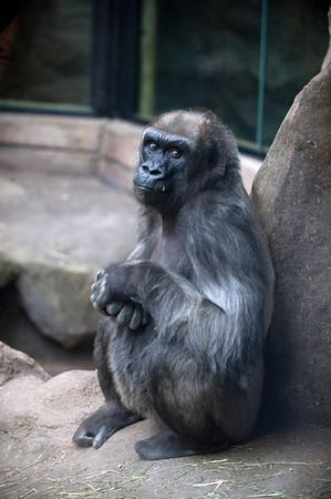 GIgi, 39,<br /> Franklin Park Zoo<br /> Photo by Desi Smith