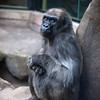 GIgi, 39,<br /> Franklin Park Zoo<br /> Photo by Desi Smith