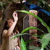Brandi Baitchman checks one of the birds at the Franklin Park Zoo.<br /> Photo by Desi Smith