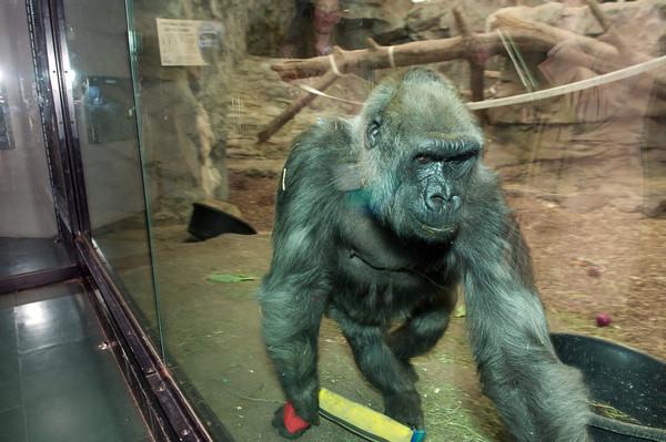 Franklin Park Zoo<br /> Photo by Desi Smith