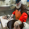 "Desi Smith/Cape Ann Magazine. Paul ""Sasquatch"" Cohan preparing fish to be smoked."