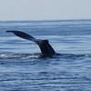 ptown-whalewch