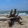 Hardings Beach<br /> Chatham, MA<br /> April 2019