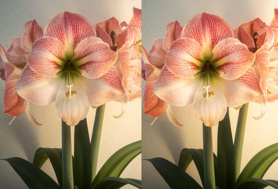 amyrillis in stereo
