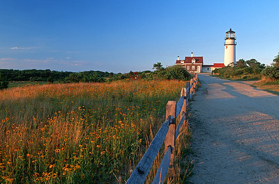 wildflowers & Highland Light