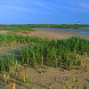 salt marsh Wood End